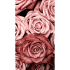roses - Tła -