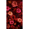 roses - Background -