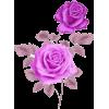 roses - Biljke -