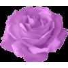 roses - Rośliny -