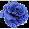 Ruža - Rośliny -