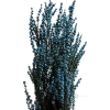 Plants - Plants - 1.00€  ~ $1.16