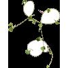 Plants Green - Biljke -