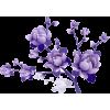 Plants Purple - Piante -