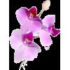 Plants Purple - Plants -