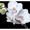 Plants White - 植物 -