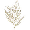 Plants Gold - Plants -