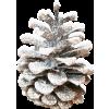 Acorn - Plantas -