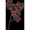 Plants Red - Piante -