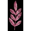 Plants Pink - Rośliny -
