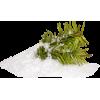Plants Green - Plantas -