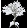 Plants White - Plants -