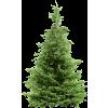 Plants Green Tree Pine - Plants -
