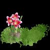 Plants Green Flower - Plants -