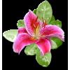 Plants Pink Flower - Plantas -