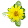 Plants Yellow Flower - Plantas -