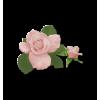 Plants Pink Flower - Biljke -