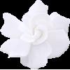 White Plants Flower - Растения -