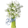 Flowers White Plants - Растения -