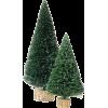Xmas Tree - Plantas -