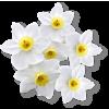 Flowers White Plants - Plants -