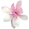 Flowers Pink Plants - 植物 -
