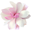 Flowers Pink Plants - Piante -