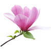 Flowers Pink Plants - Plants -