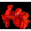 Flowers Red Plants - Plants -