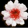 Flowers White Plants - 植物 -