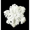 White flower - イラスト -