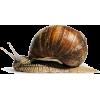 Snail - Animals - 67.00€  ~ $78.01