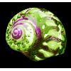 sea snail - 动物 -