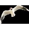 seagull - Animales -