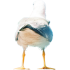 seagull - Animals -
