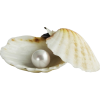 sea shell - Nature -