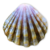 Seashell Blue - Animali -