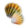 Seashell Yellow - Predmeti -