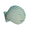 Seashell Blue - 小物 -