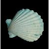 Seashell Blue - Items -
