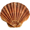 Shell.png - 自然 -