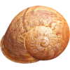 Shell2.png - Nature -