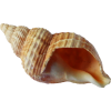 Shell3.png - Nature -