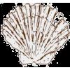 shell - Illustrations -