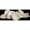 shells - Articoli -