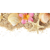 shells - 自然 -