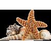 shells - Zwierzęta -