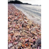 shells on the beach - Nature -