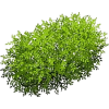 shrub - Biljke -