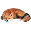 sleeping fox - Animals -